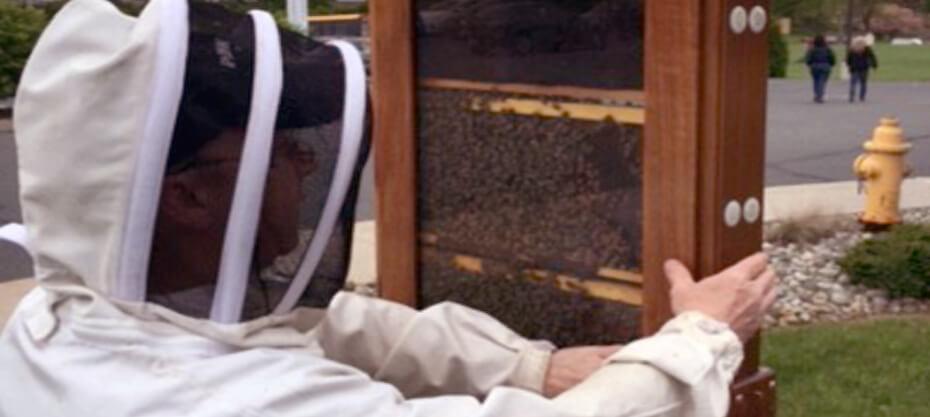B104 Honeybee Hive